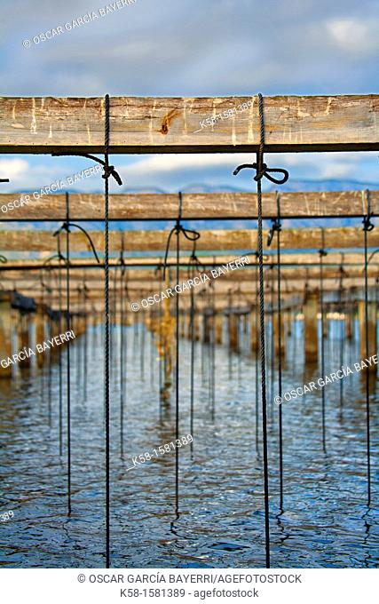 String base to raise mussels in the natural park nurseries Ebro Delta