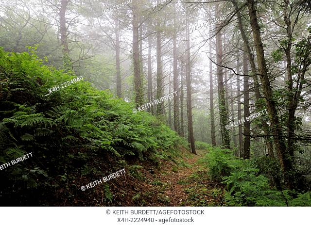 Public Footpath through misty woodland, Llanrhystud, Wales, UK