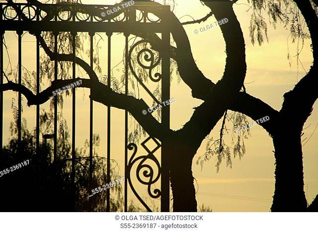Two similar trees and a gate in the sunset. Barcelona, Catalonia, Spain