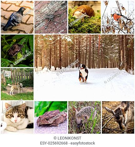 A collage of 11 photos of different animals. In the center is a mountain dog