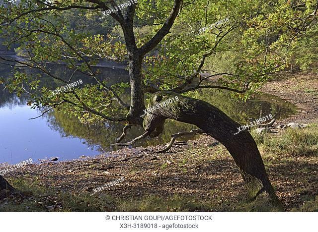 """site du """"""""Petit Etang Neuf"""""""", commune of Poigny-la-Foret, foret de Rambouillet, parc naturel regional de la haute vallee de Chevreuse, departement des Yvelines"""