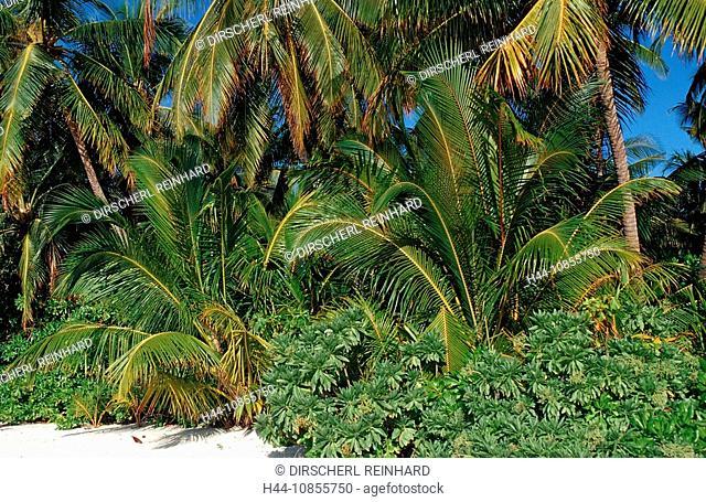 10855750, Maldives, Indian Ocean, Medhufushi, Meem