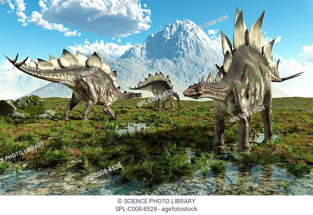 Stegosaurus dinosaurs, computer artwork. Stegosaurs 'roofed reptiles' were herbivores that lived throughout the world during the Jurassic period