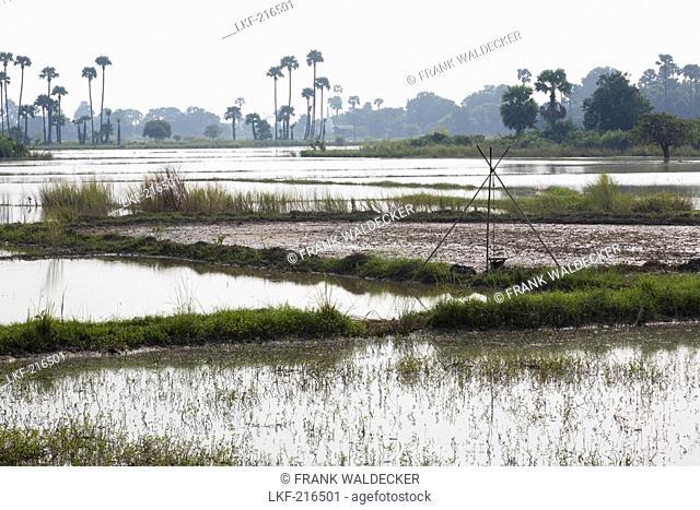 Rice fields on Inwa island  Ava  at Ayeyarwady River near Amarapura, Myanmar, Burma