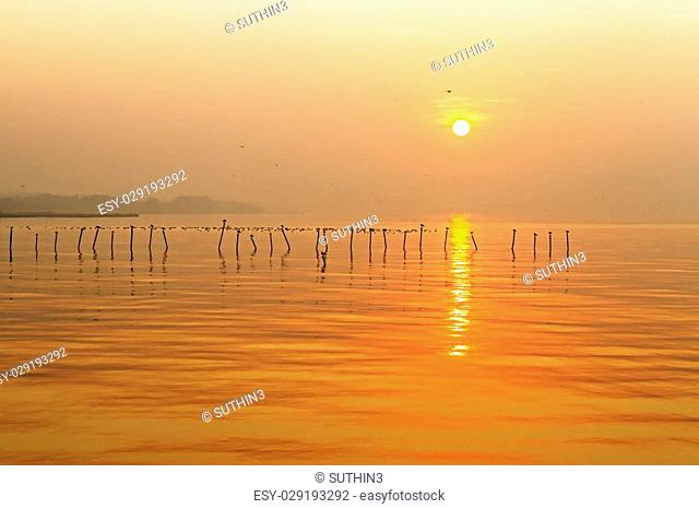 Morning sunrise with seagull at Bang Pu Seaside of Thailand