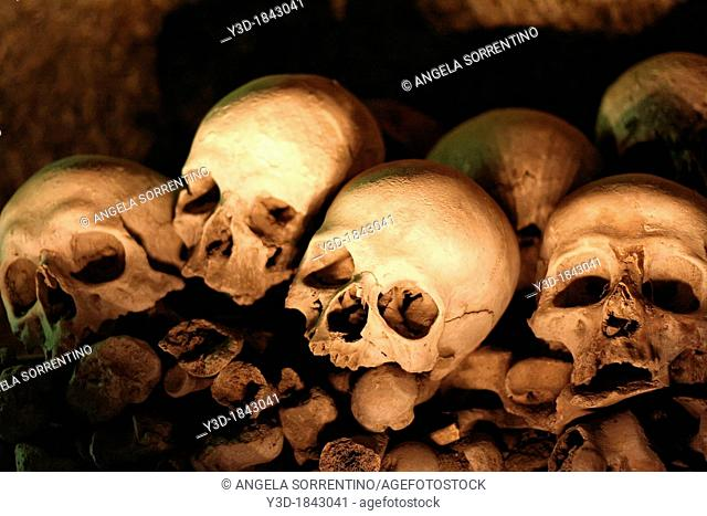 Skull collection