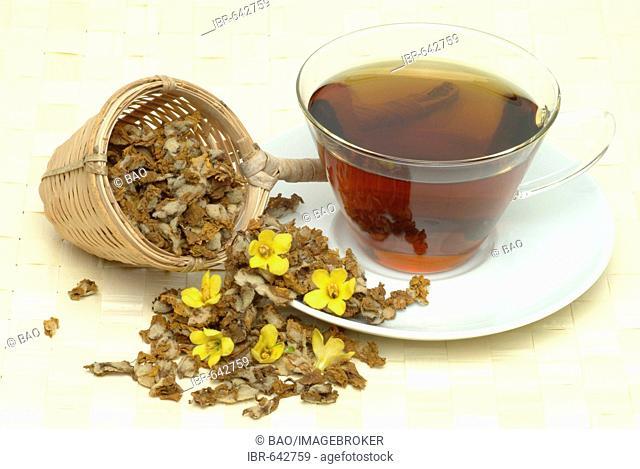 Dense Mullein, Denseflower Mullein (Verbascum densiflorum), medicinal plant, herbal tea