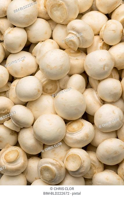 Pile of white mushrooms