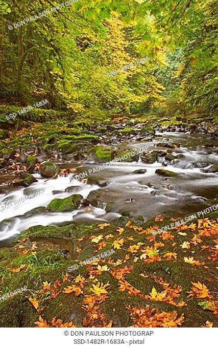 Stream flowing in a forest, Cedar Creek, Woodland, Washington State, USA