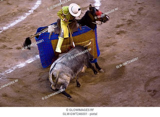 High angle view of a bull fighting, Plaza De Toros San Marcos, Aguascalientes, Mexico