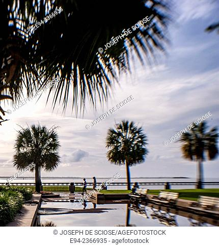 Benches and palm trees in Water Front Park in Charleston South Carolina with a puddle in the foreground