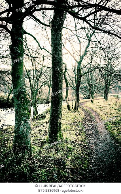 Forest with trees and a path. Buckden, Skipton, Yorkshire Dales, North Yorkshire, England, UK