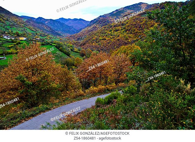 Country road trough an autumnal forest in Robledo, Somiedo, Asturias, Spain