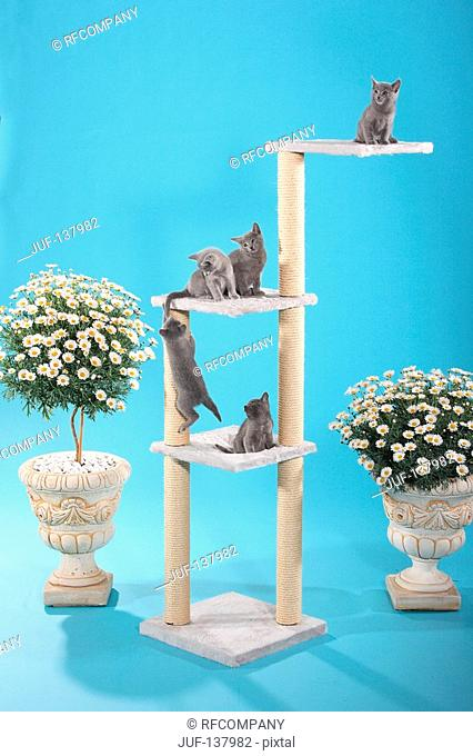 five kittens on scratching post