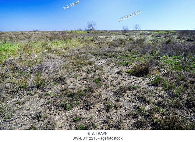 dunes and shrubs landscape of Danube delta, Romania, Dobrudscha, Biosphaerenreservat Donaudelta, SfÔntu Gheorgh