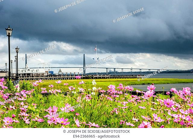 The Arthur Ravenel Jr. Bridge in the background with coreopsis plants in the foreground in Charleston South Carolina