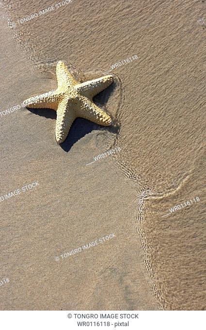startfish and beach