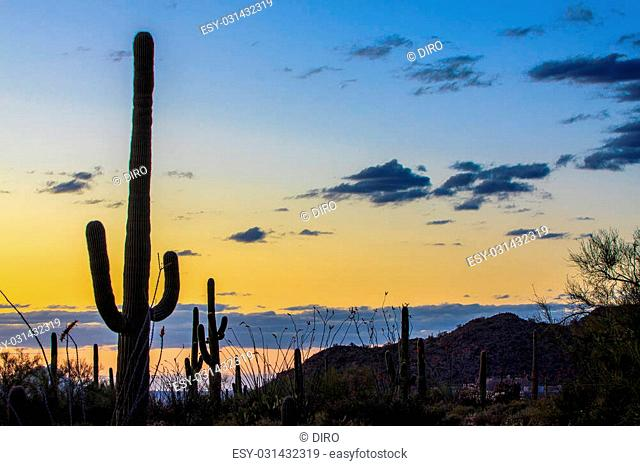 Amazing Sunset Image of Saguaro National Park