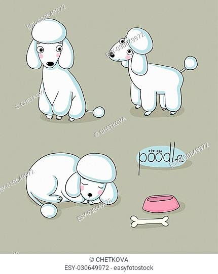 Set of cute poodle illustration in different poses. Portrait of a dog for decoration and design. Vector illustration