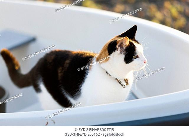 Calico Cat in Boat, Profile