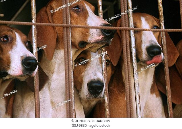 dogs behind bars