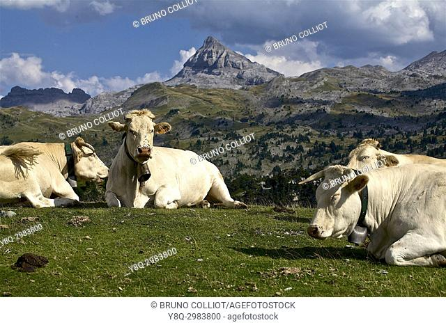 pastoralism at the pass of the stone st martin on the peak of Anie in the background. GR10. . The neck of the Pierre Saint-Martin is a mountain pass of the...