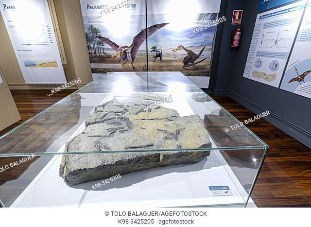 Prejanopterus curvirostra, Centro Paleontológico , Enciso, La Rioja , Spain, Europe