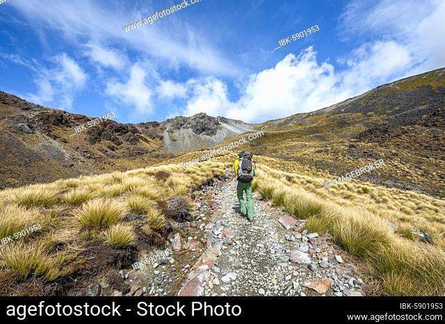 Hikers on trail, Kepler Track, Great Walk, Mount Luxmore behind, mountain landscape with grass, Kepler Mountains, Fiordland National Park, Southland