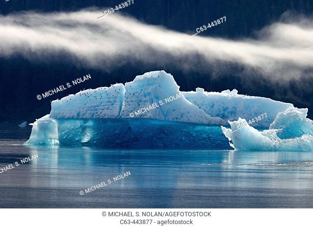 Icebergs and bergy bits that have calved off the Sawyer tidewater Glacier in Tracy Arm, Southeast Alaska, USA