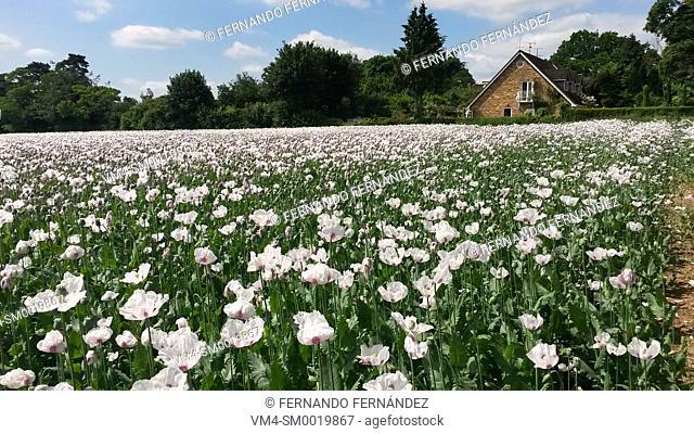 Landscape in spring.Oxfordshire. England
