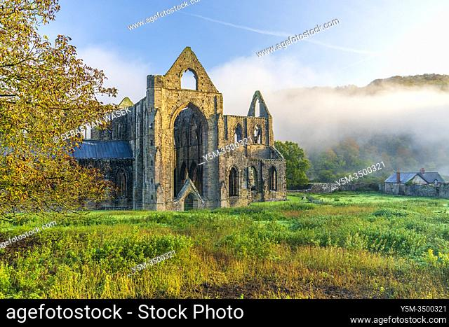 The ruins of the XII century Cistercian Abbey of Tintern, in the Wye Valley, Wales, United Kingdom, Europe