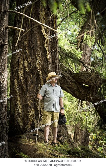 A man, 65, hiking by the large trees on Saturna Island, BC, Canada