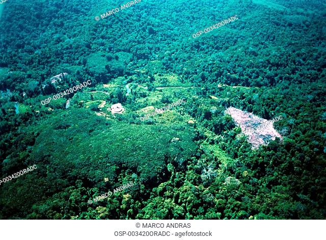 aerial view of the trees forest