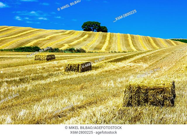 Cereal farm. Tierra Estella County, Navarre, Spain, Europe