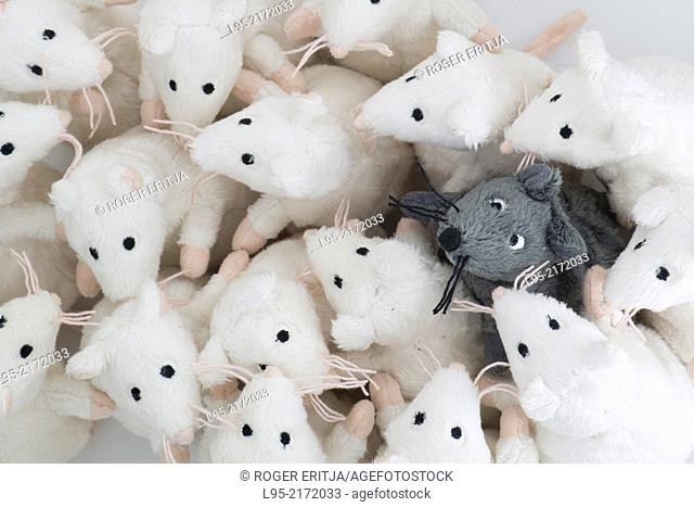 Single black mouse integrated in a group of human-like white mice