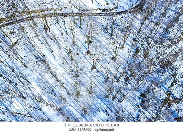 Beech forest in winter. Valley of Ulzama. Navarre, Spain, Europe
