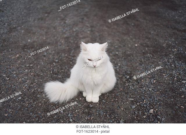 High angle view of white cat sitting on gravel