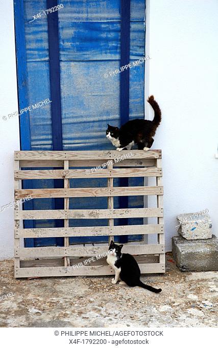 Greece, Cyclades, Santorini, street cat