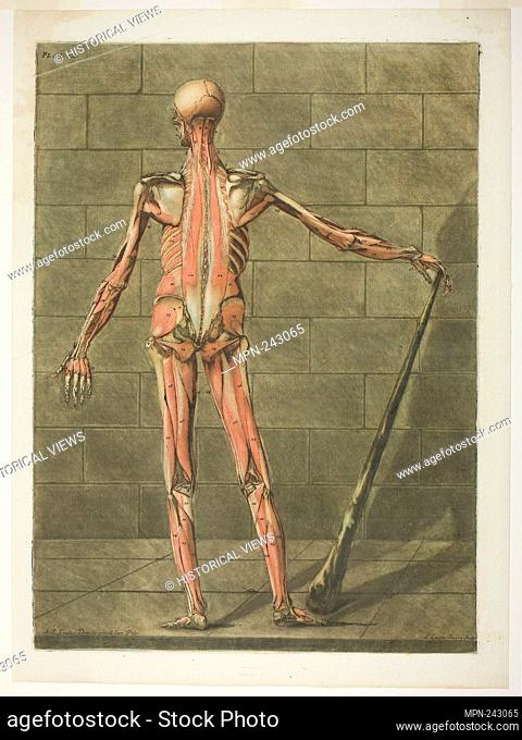 Posterior View of Muscle Man, plate nine from Complete Anatomy Course - 1773 - Arnault Éloi Gautier D'Agoty French, 1741-1780 or 1783 - Artist: Arnauld Éloi...