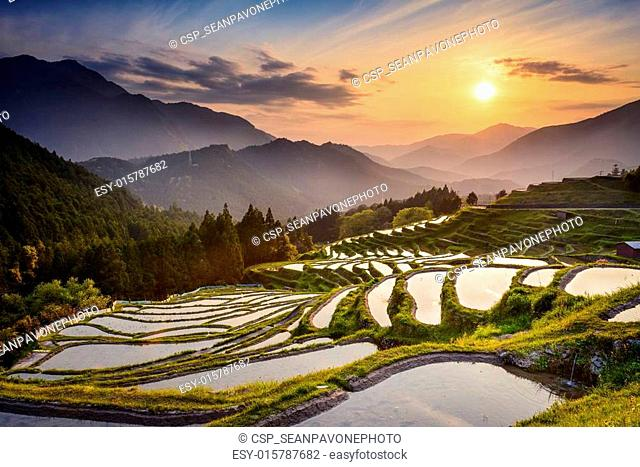Rice Terraces at Sunset