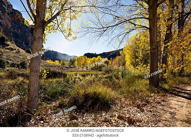 Autumn in the Dulce river gorge. Aragosa. Guadalajara. Castilla la Mancha. Spain