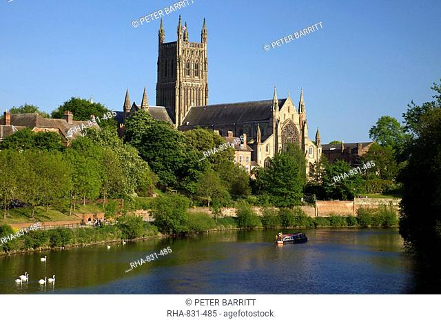 Mute swans and barge on River Severn, spring evening, Worcester Cathedral, Worcester, Worcestershire, England, United Kingdom, Europe