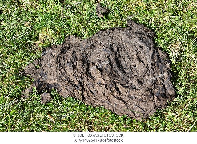 cow pat dung in a field in ireland