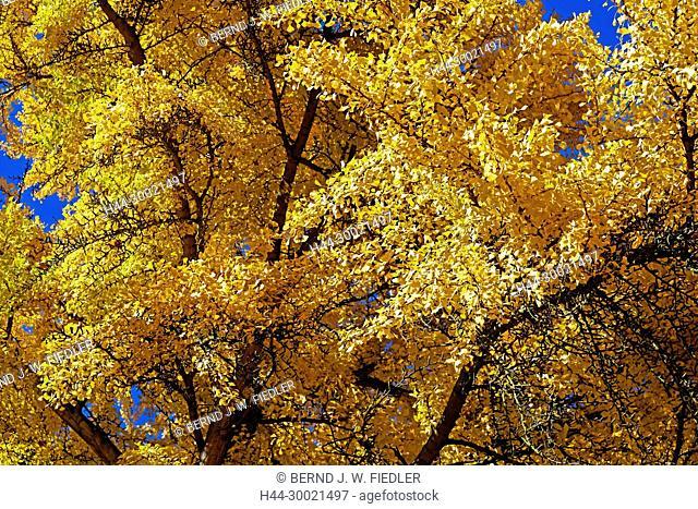 Park Président John Fitzgerald Kennedy, Herbstlaub, Blätter, gelb