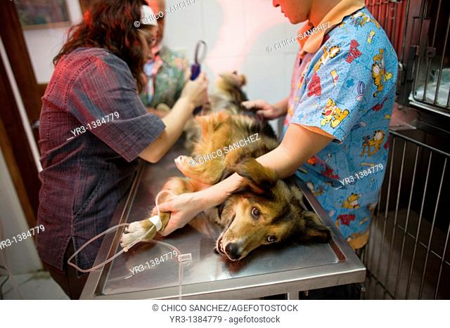 Veterinarians shave a dog before a surgery at a Pet Hospital in Condesa, Mexico City, Mexico, February 4, 2011
