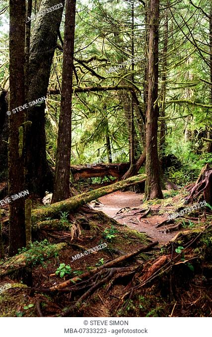 View into the rainforest, Pacific Rim National Park, Canada