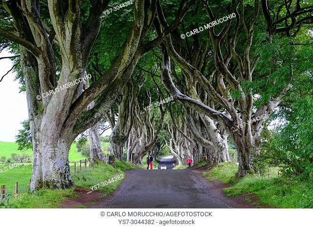 The Dark Hedges is an avenue of beech trees, Game of Thrones location, along Bregagh Road, County Antrim, Northern Ireland