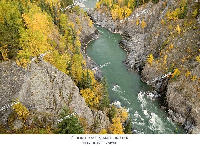 View into the ravine of the Bulkley River near Seaton, British Columbia, Canada, North America