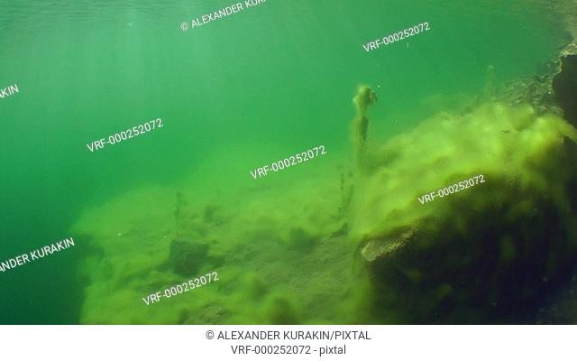 Swim over the stones lying in shallow freshwater lake, the sun's rays in the water column. Mykolaiv region. Ukraine
