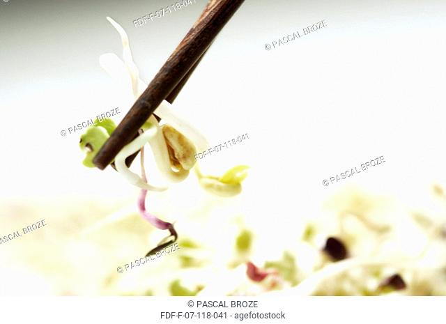 Close-up of soybean sprouts on a pair of chopsticks